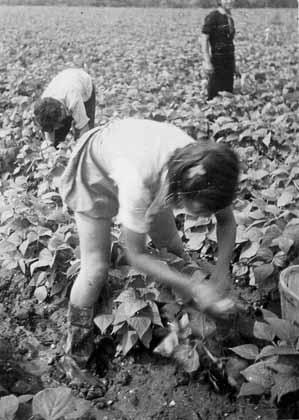 childfarmworker2